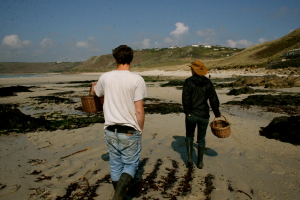 Seaweed foraging at Sennen