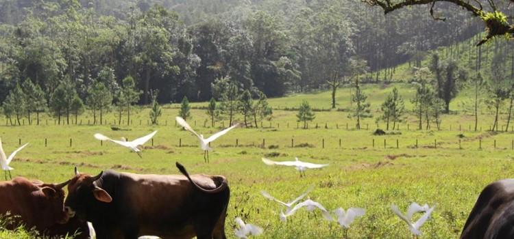Travel Feature – Costa Rica