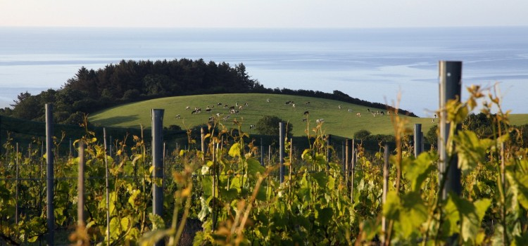 Sweet Wine From Cornwall Is Critics Choice At Awards