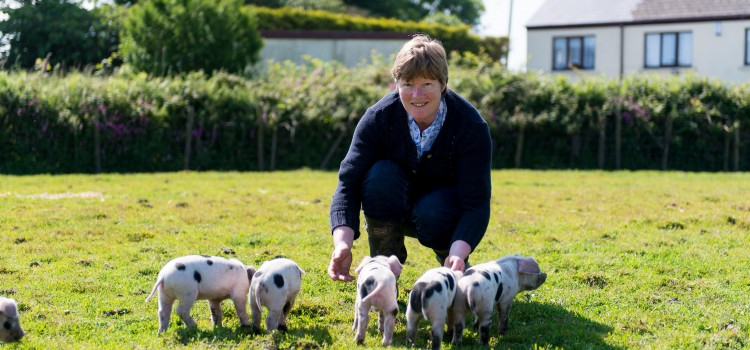 A year of adaptation and growth for Cornwall's award-winning pork producer