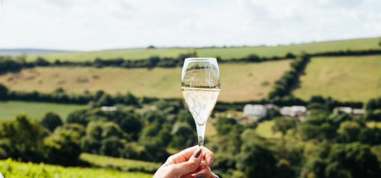 Cornish Wine Tourism Takes Off